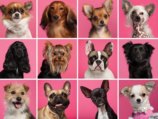 Castingagentur für Hunde und andere Haustiere - Vorsicht und bitte kleingedrucktes lesen