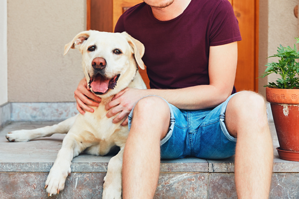 Hund Labrador mit Hundebesitzer