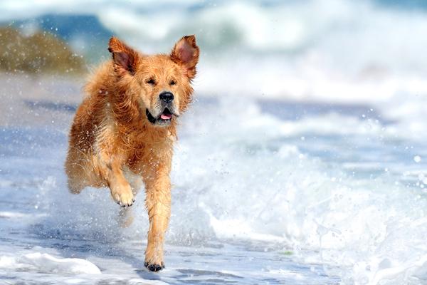 Tierischer Hundebadespass mit Folgen