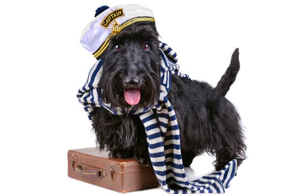 Reisetipps für den Urlaub mit dem Hund