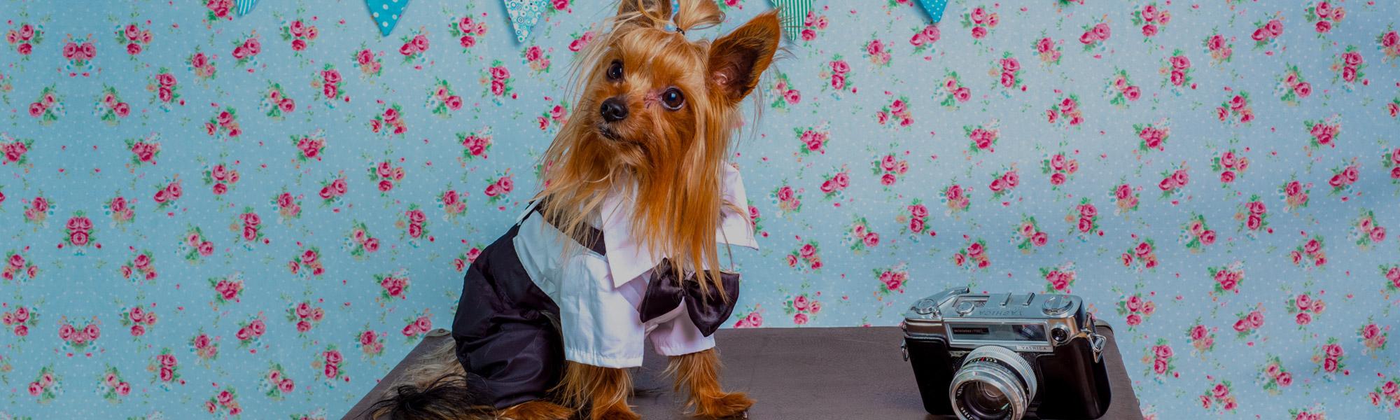 Der Hundemodeblog - Schicke uns deine Erfahrungen mit Hundemode auf Hundemantel-Mode.de