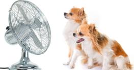 Abkühlung für den Hund im Sommer - Hundepool, Hundekühlweste jetzt auf Hundemantel-Mode.de kaufen