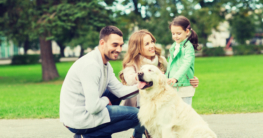 Hunderasse Labrador als Familienhund