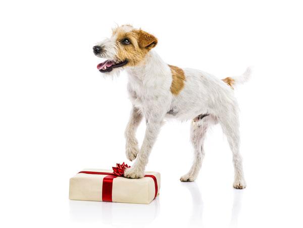 GPS Hundehalsband als Weihnachtsgeschenk für deinen Hund - Online kaufen auf Hundemantel-Mode.de