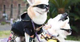 Hundemantel für den Sommer und Frühling online kaufen auf Hundemantel-Mode.de