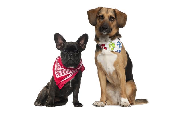 Kleine Hunderassen mit Hundeschal - Jetzt Hundeloop auf Hundemantel-Mode.de kaufen