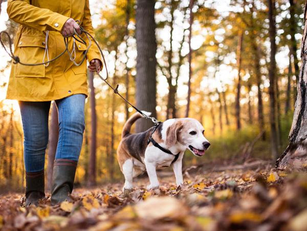 Spaziergang mit dem Hund durch den Wald - Pfotenschuhe