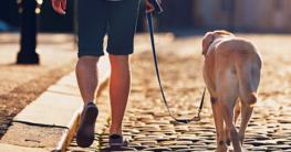 Hund an der Leine beim Spaziergang in der Innenstadt - Hundeleine kaufen auf Hundemantel-Mode.de