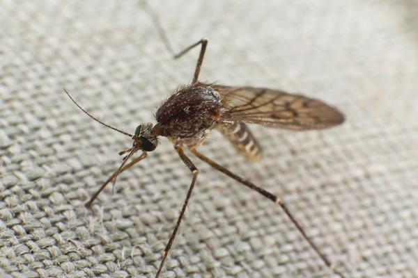 Den Hund vor Mücken schützen besonders im Hochsommer