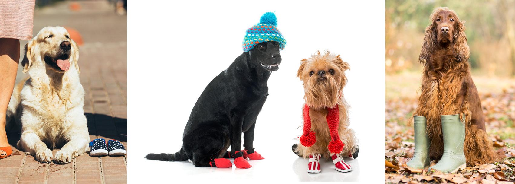 Hundepfotenschuhe