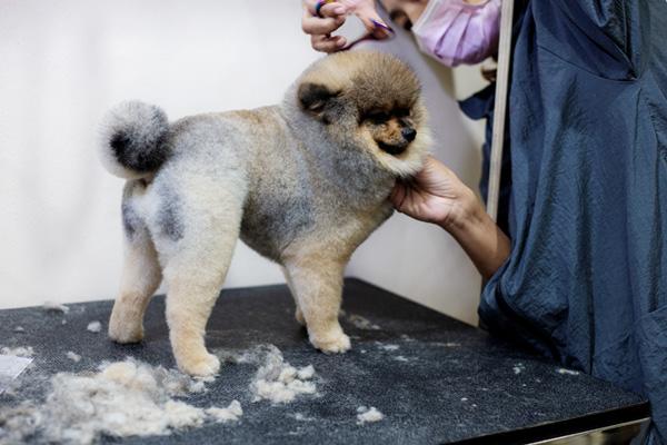 Hund mit dickem Winterfell beim Hundefrisör