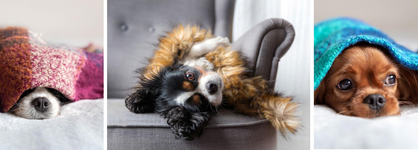 Hundedecken in den verschiedensten Ausführungen auf Hundemantel-Mode.de kaufen