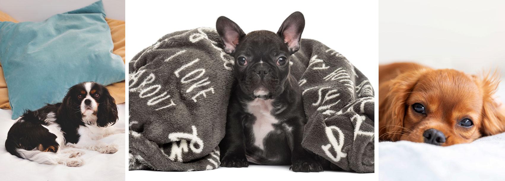 Hundekissen groß und klein auf Hundemantel-Mode.de