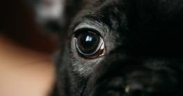 Tränende Hundeaugen