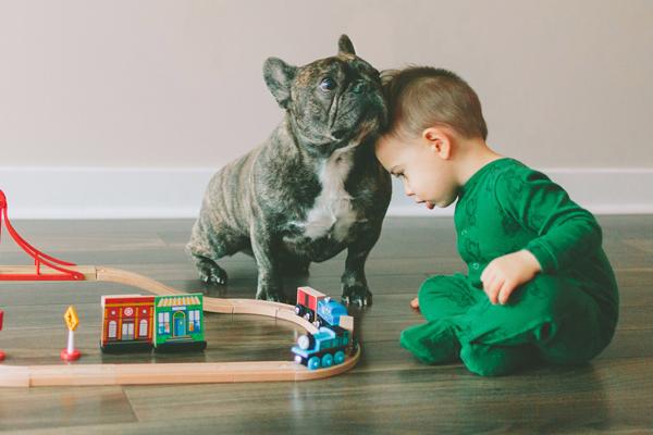 Quarantäne Und Hund